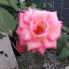 1001_1759105468_avatar