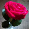 1001_1681675909_avatar