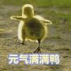 1001_1151181942_avatar