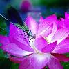 1001_809602056_avatar