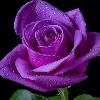 1001_1848776654_avatar