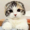 1001_1767723741_avatar