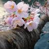 1001_1408773150_avatar