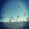 1001_2250751029_avatar