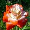 1001_1242777635_avatar
