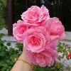 1001_649341557_avatar
