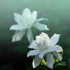 1001_1398105788_avatar