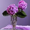1001_1534900607_avatar