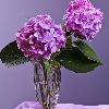1001_442811316_avatar